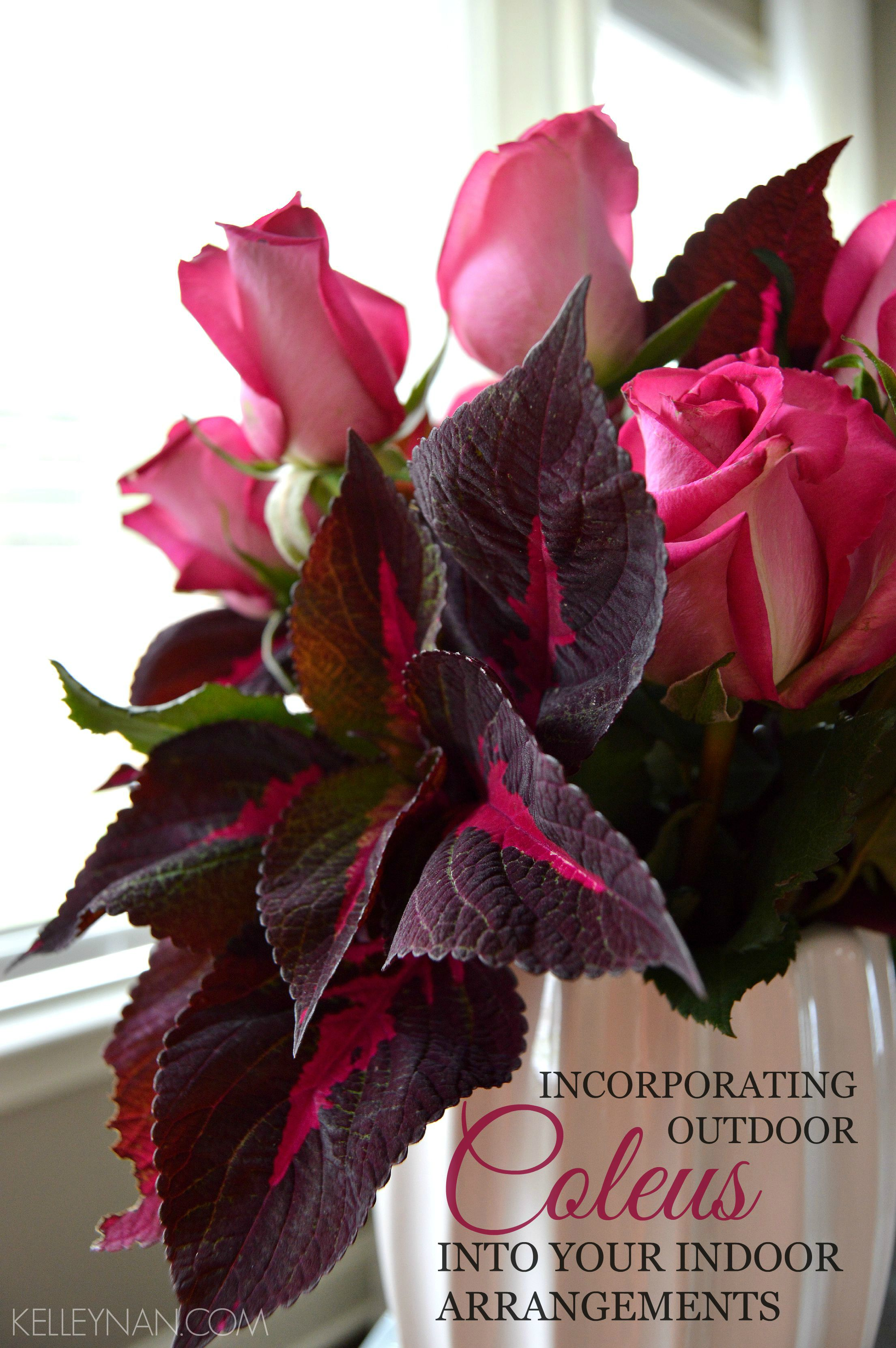 Incorporating Outdoor Coleus into Your Indoor Arrangements - Kelley Nan