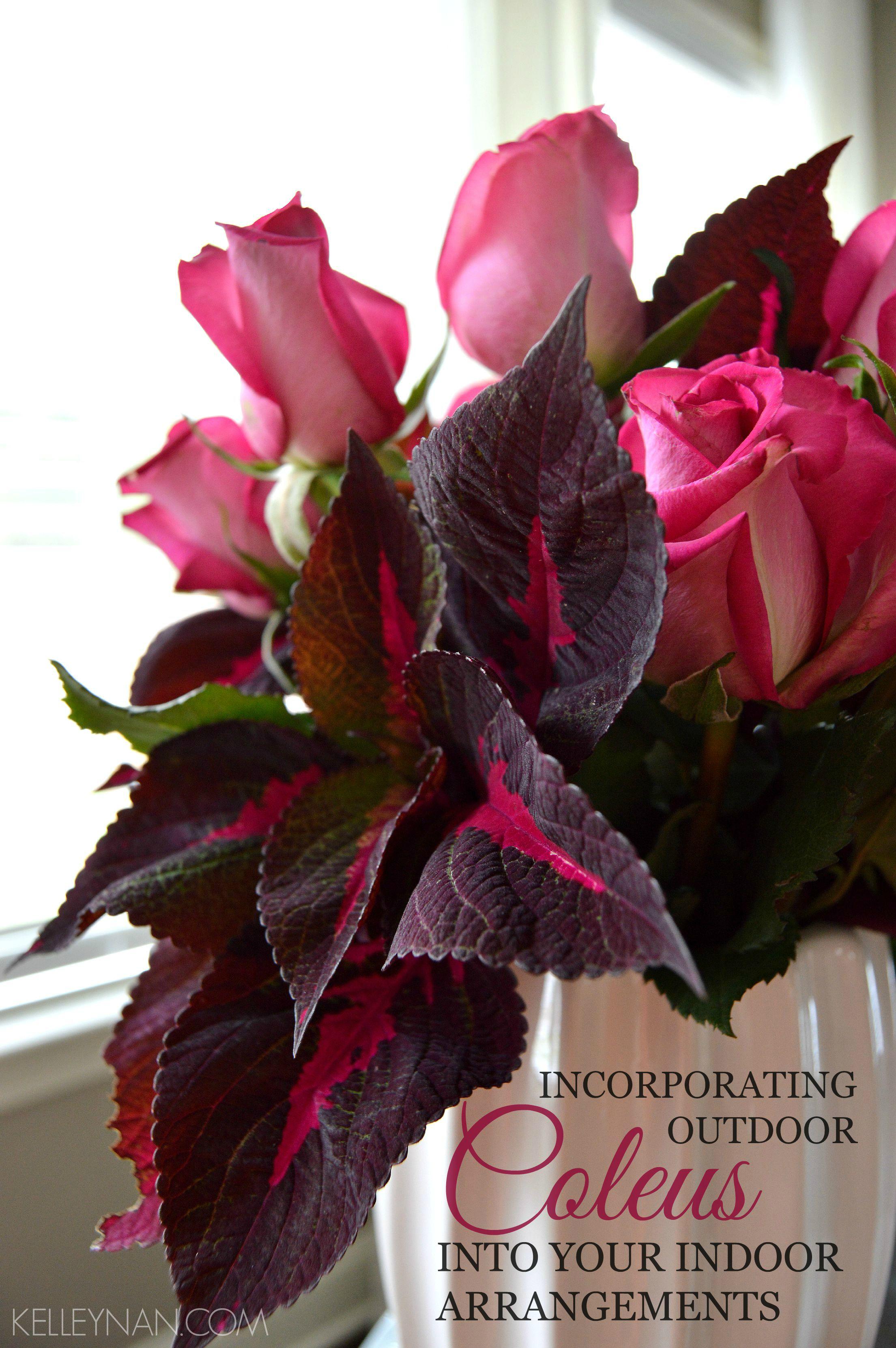 Incorporating Outdoor Coleus into Your Indoor Arrangements