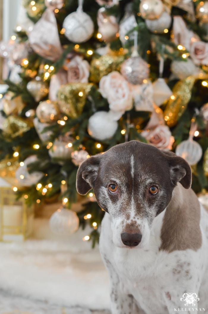 christmas-tree-with-dog-card-idea