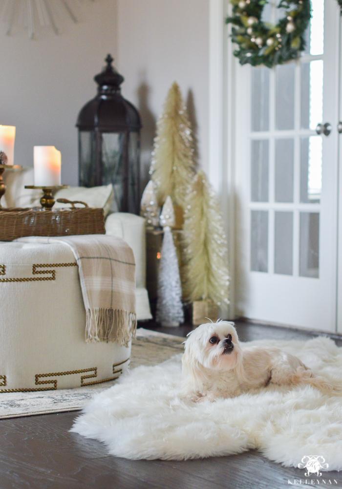 white-fluffy-dog-on-sheep-skin-rug-for-christmas