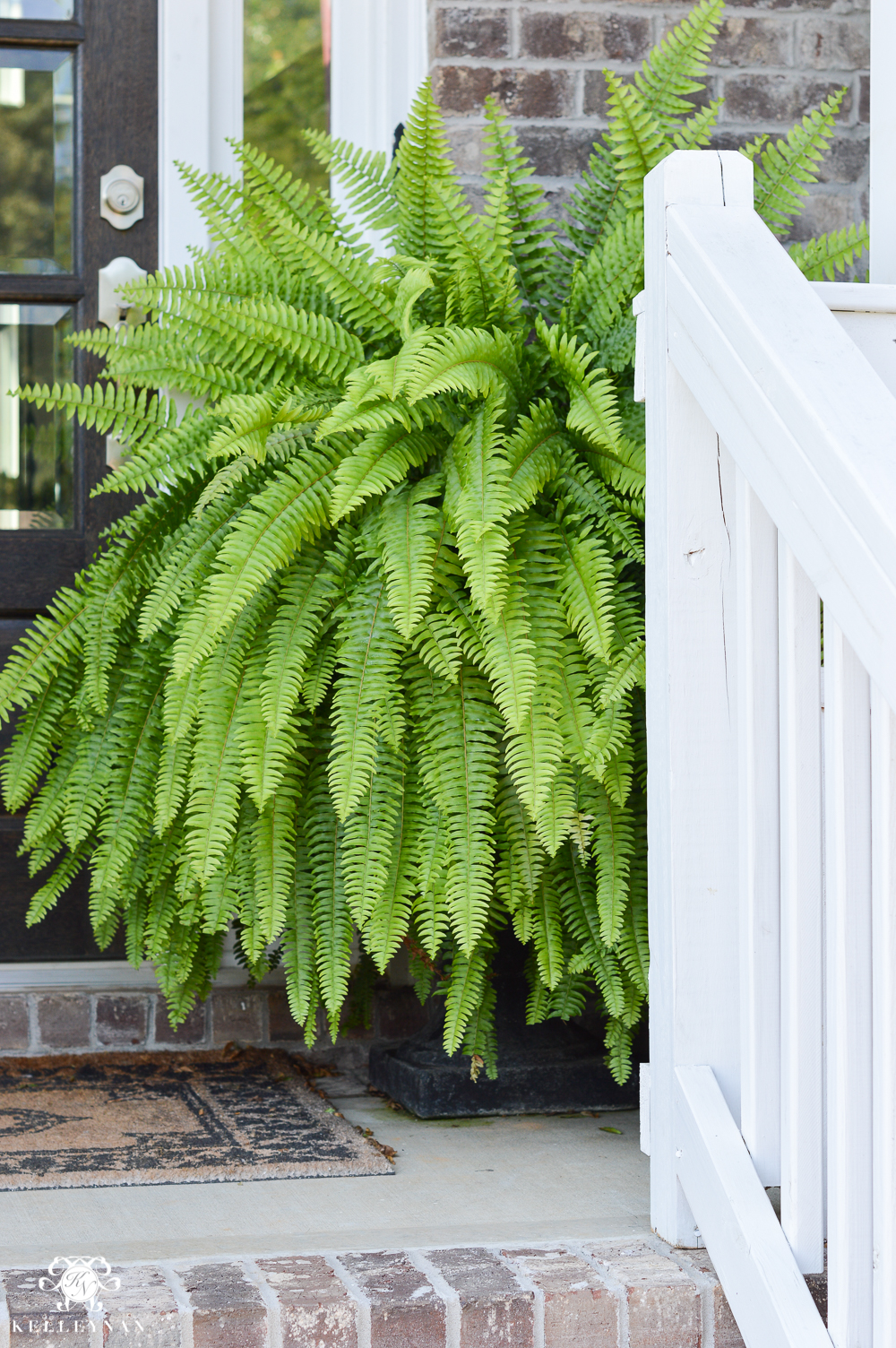 Huge front porch ferns in black urns on either side of door