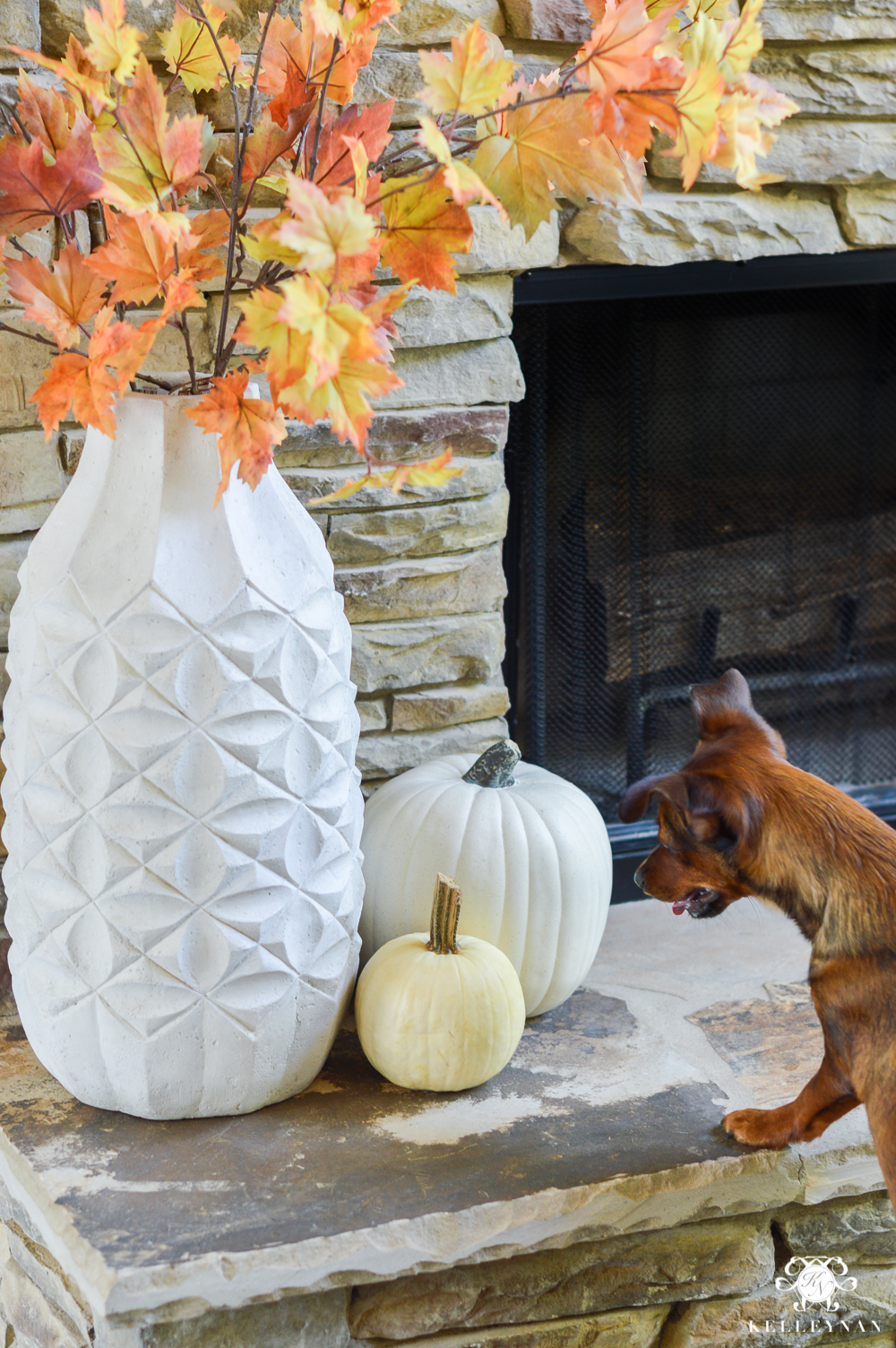 2017 Fall Home Tour with Yellow and Orange Leaves- dorkie puppy