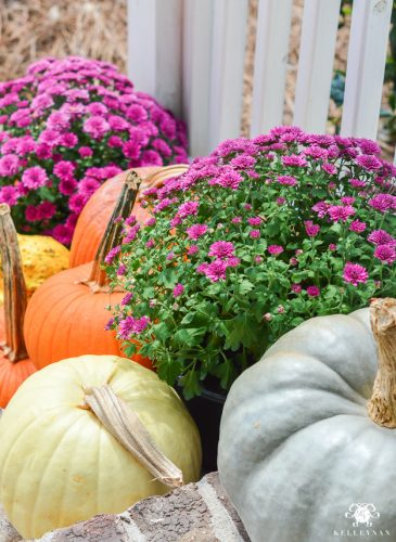 Fall front porch ideas with mums and pumpkins