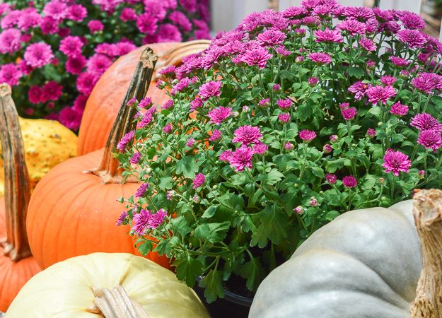 Fall Front Porch Inspiration and Some BHG Stylemaker Snapshots