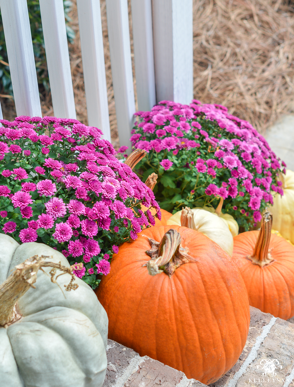 Purple mums with white and orange pumpkins