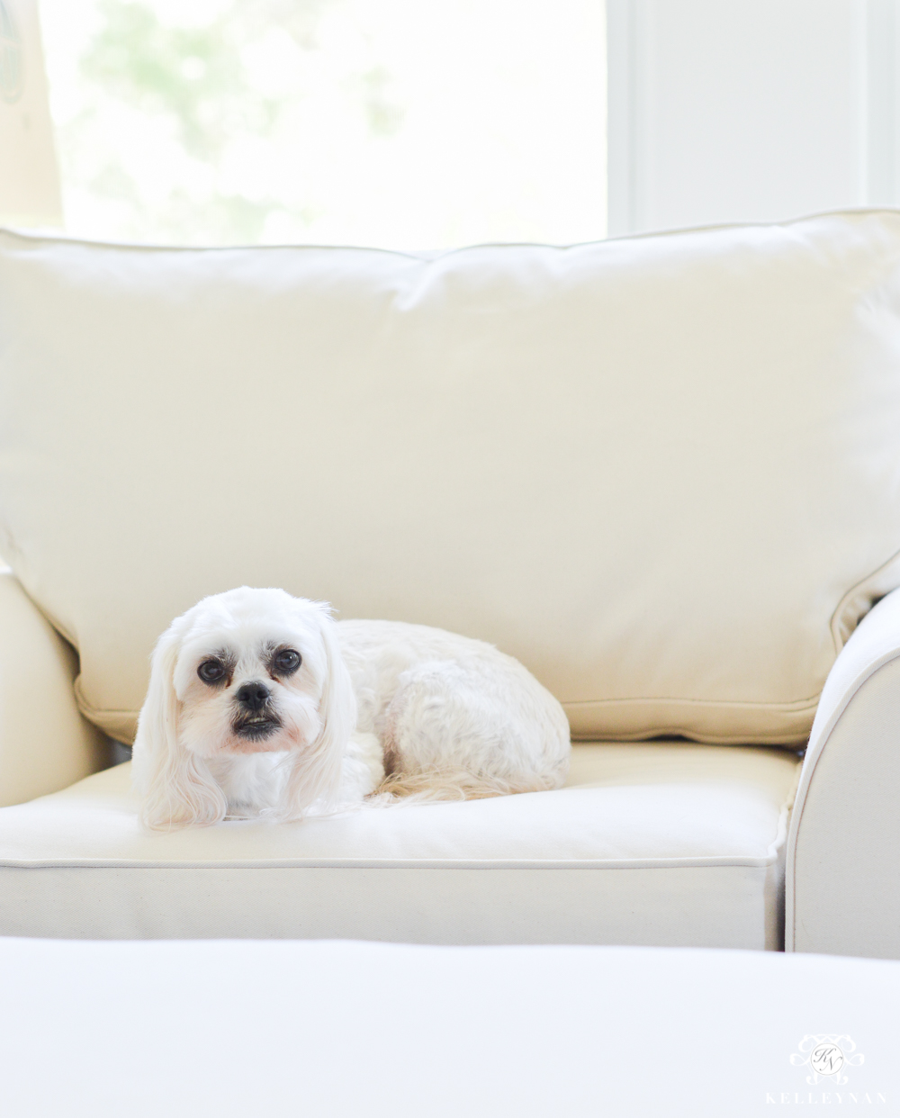 Shih tzu lounging in oversized chair
