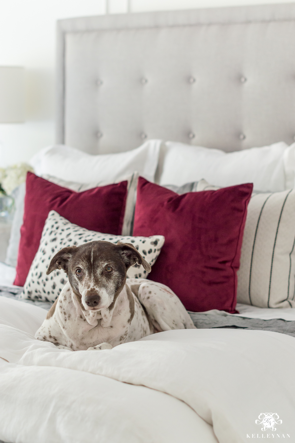 Dog on bed with red pillows