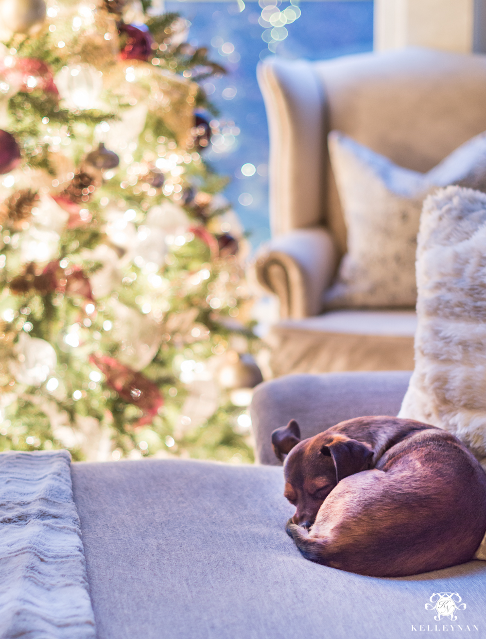 Cute puppy under the christmas tree