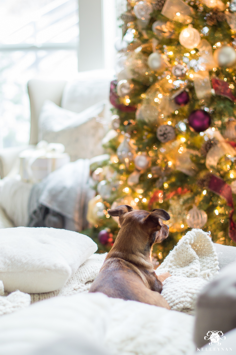 Christmas puppy under the tree