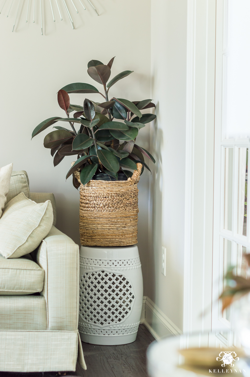 Rubber plant in basket for winter houseplant ideas