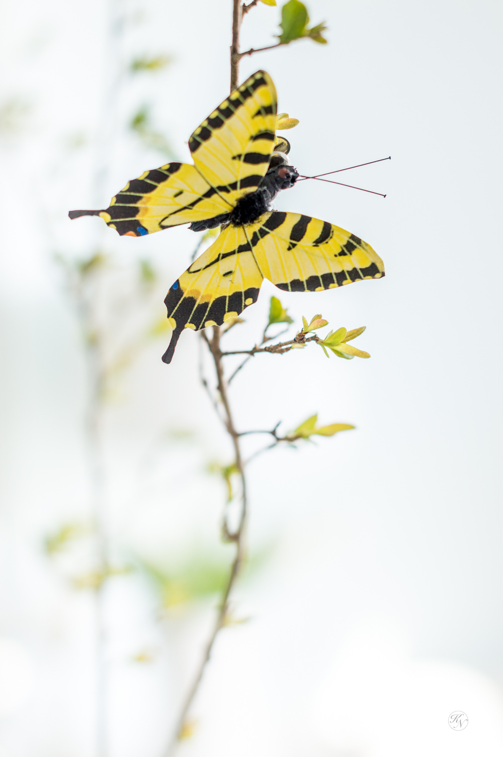 Yellow Monarch Butterfly Clip on Spring Branches