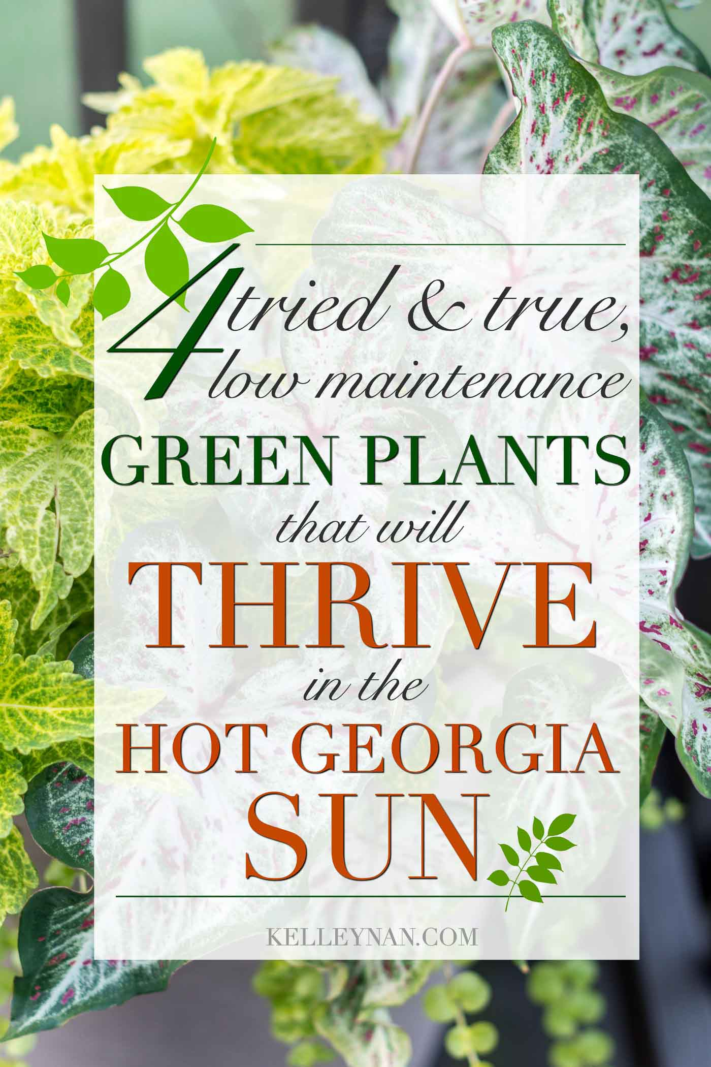Four proven low maintenance green plants that will thrive in the hot Georgia sun (or anywhere in the south!)