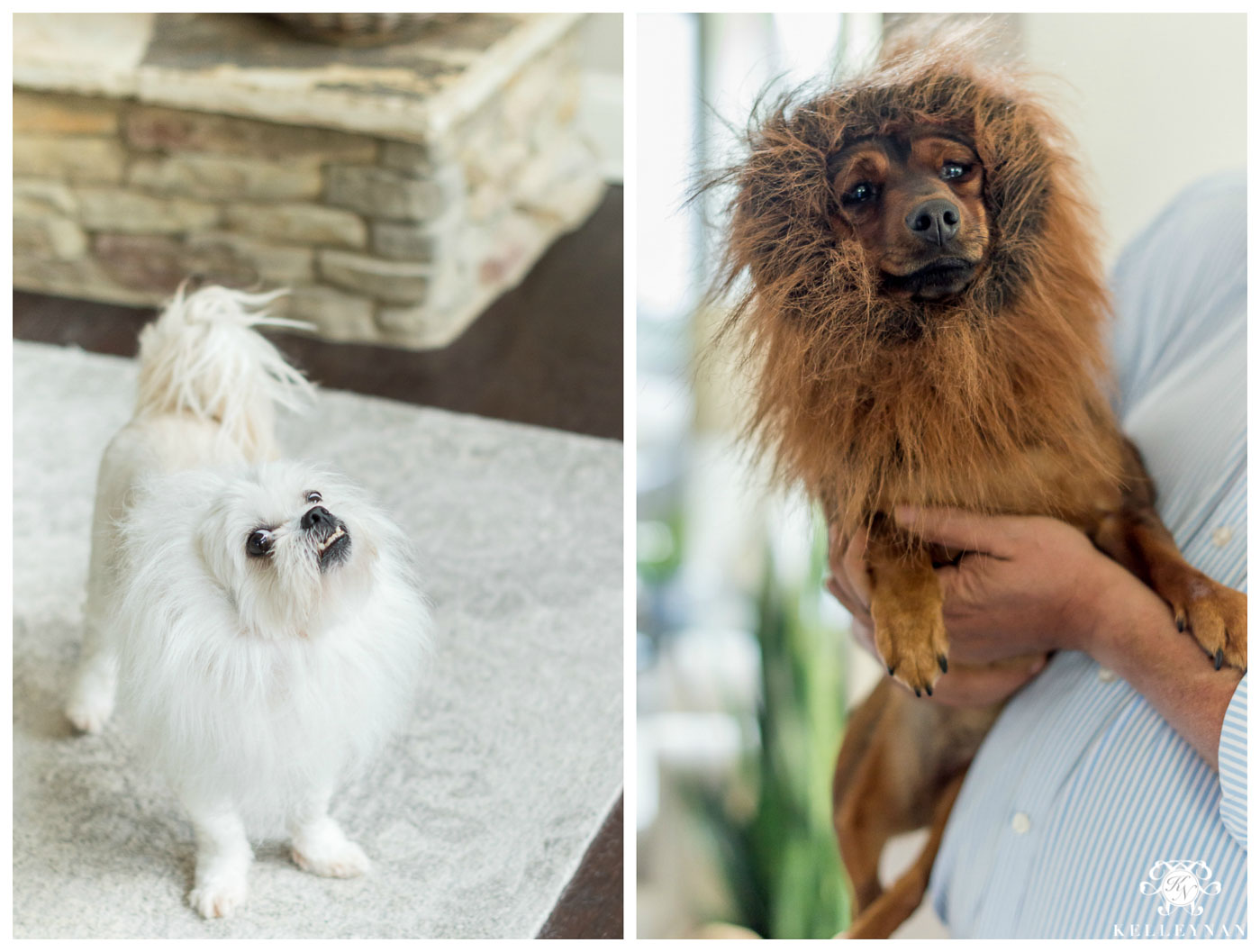 Dog Halloween costumes with lion manes