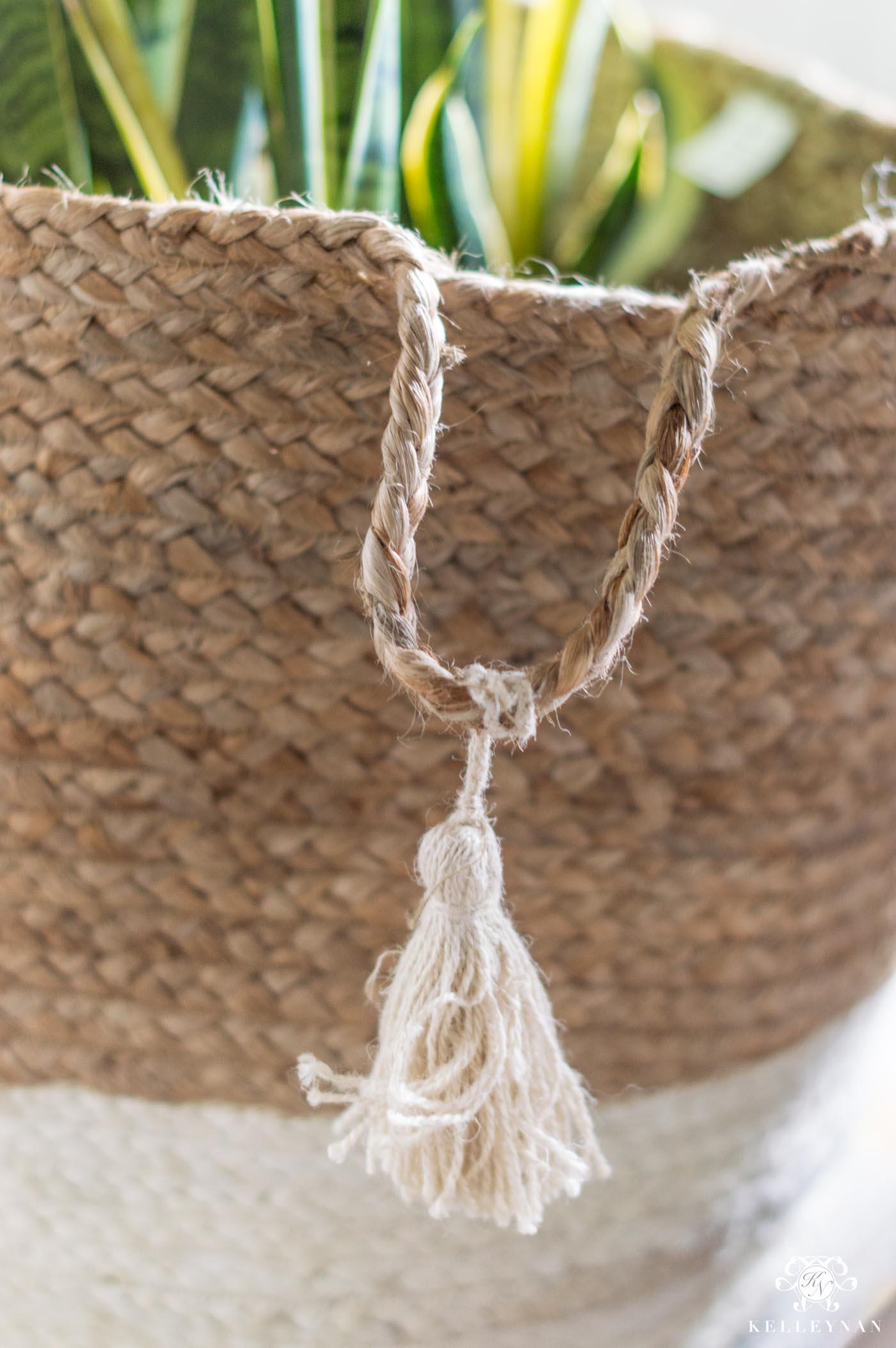 Snake Plant Basket