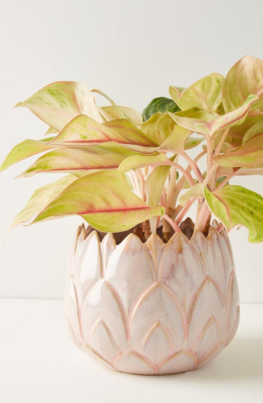 Indoor Artichoke Planter