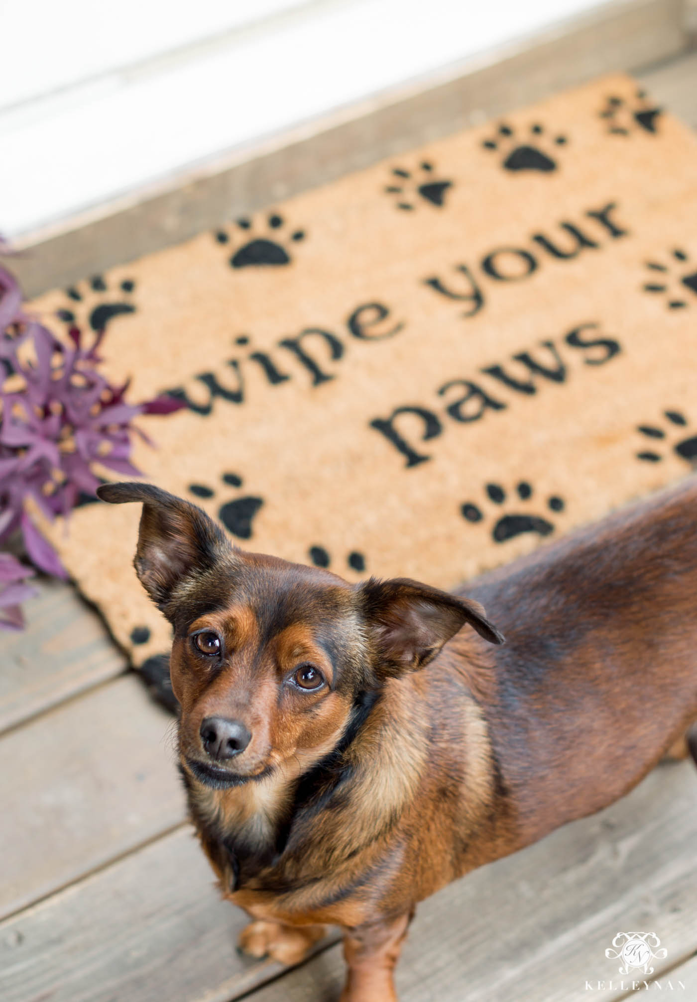 Cute puppy door mat for the back door