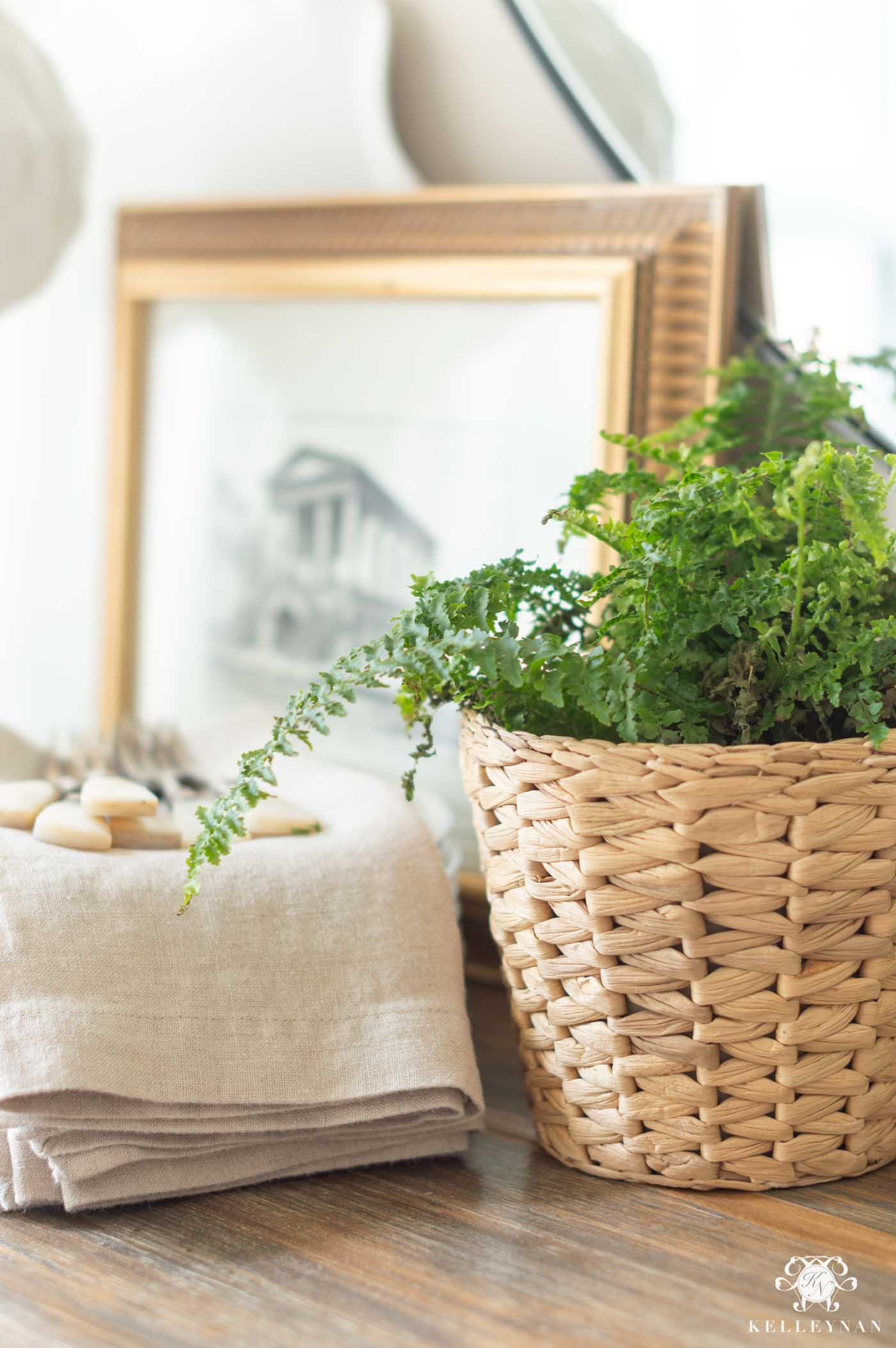 Adding Easy Live Plants to Your Spring Decor