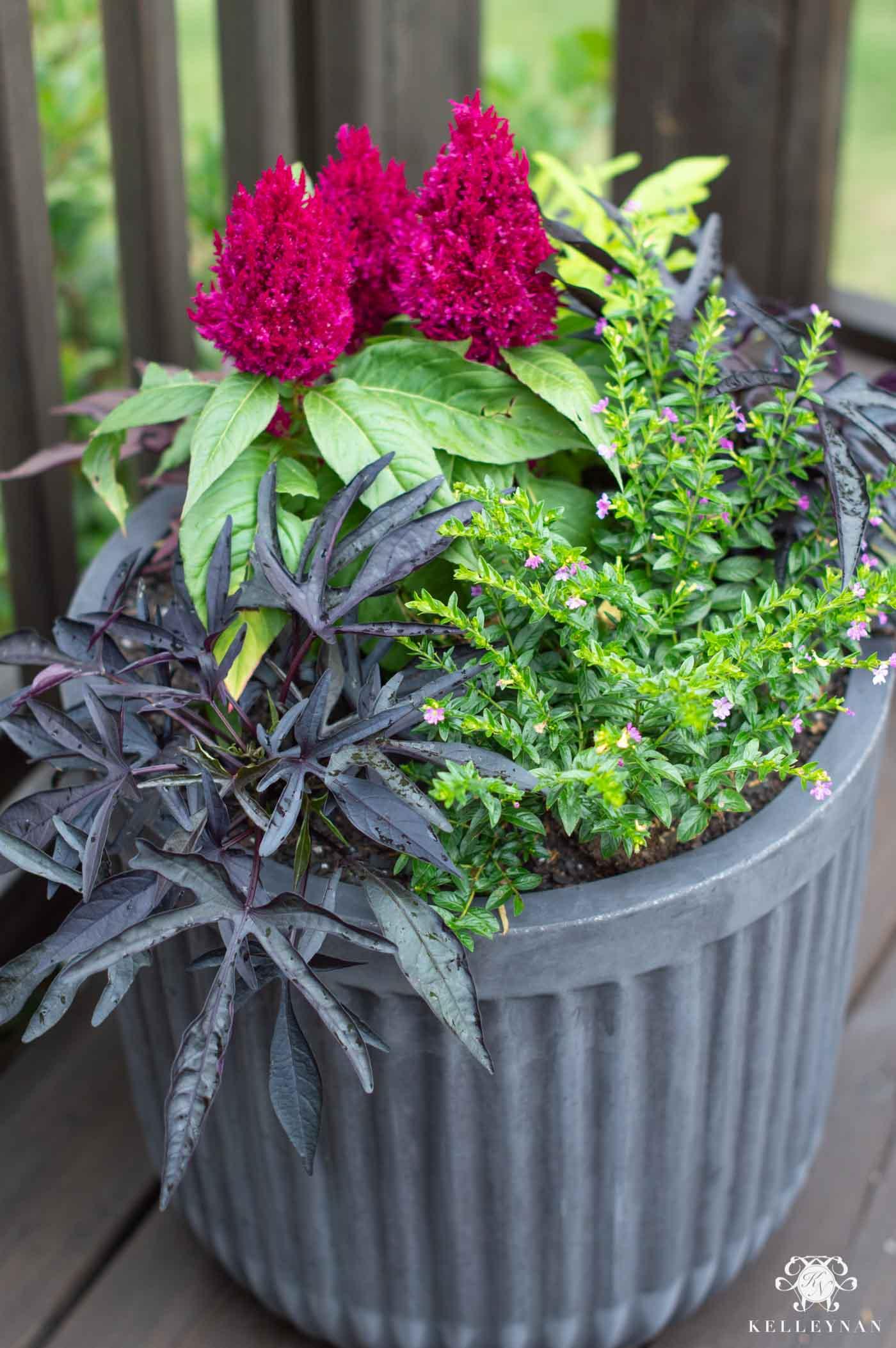 Full, Colorful Summer Planter