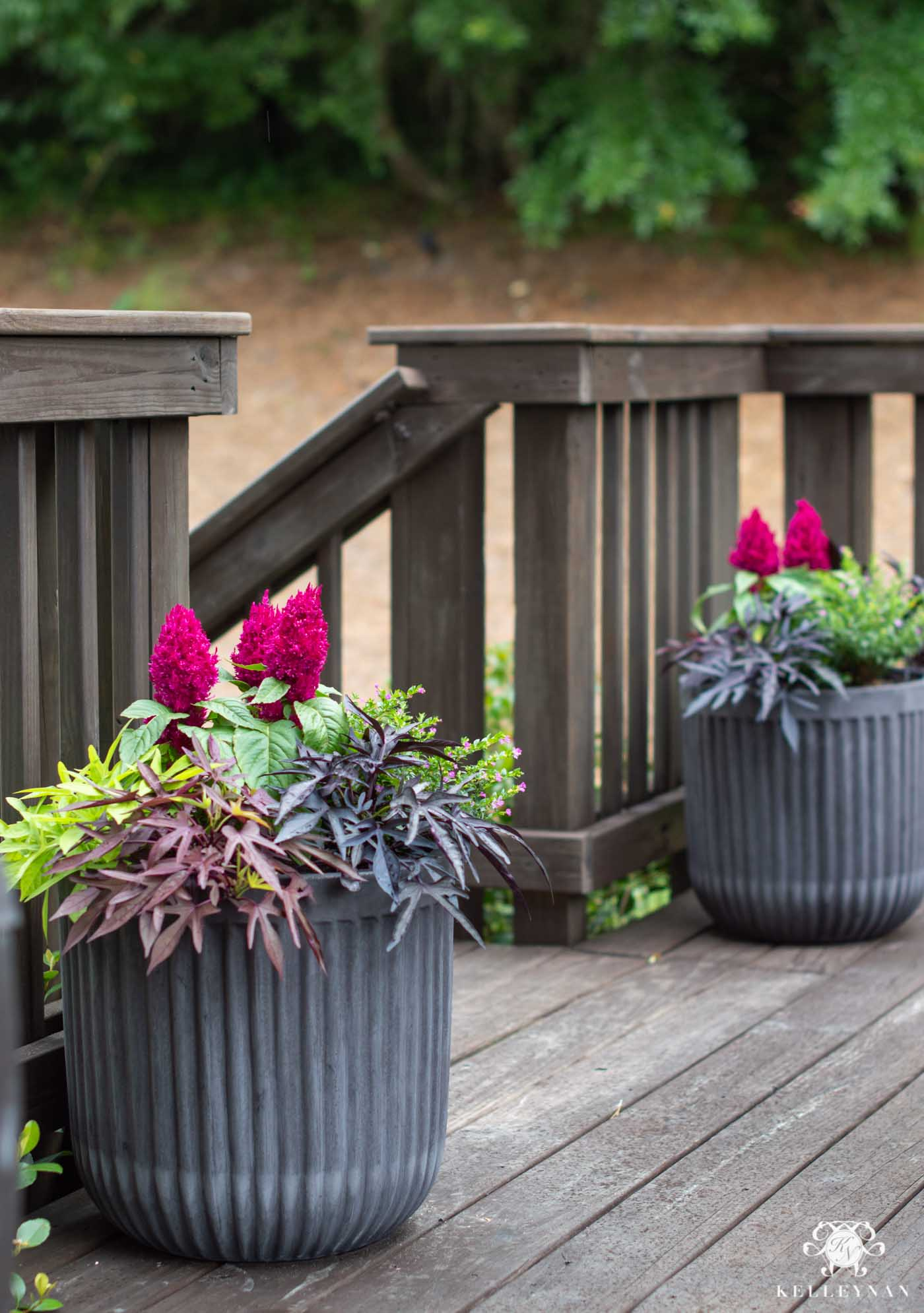 Pair of Filled Summer Planters