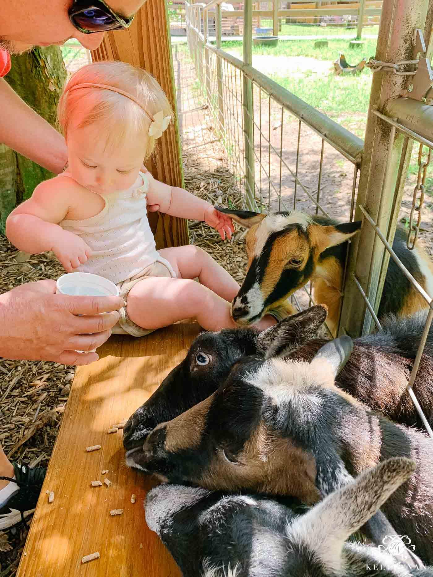 Baby First Birthday Petting Zoo