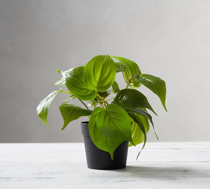 Green Plants for the Kitchen