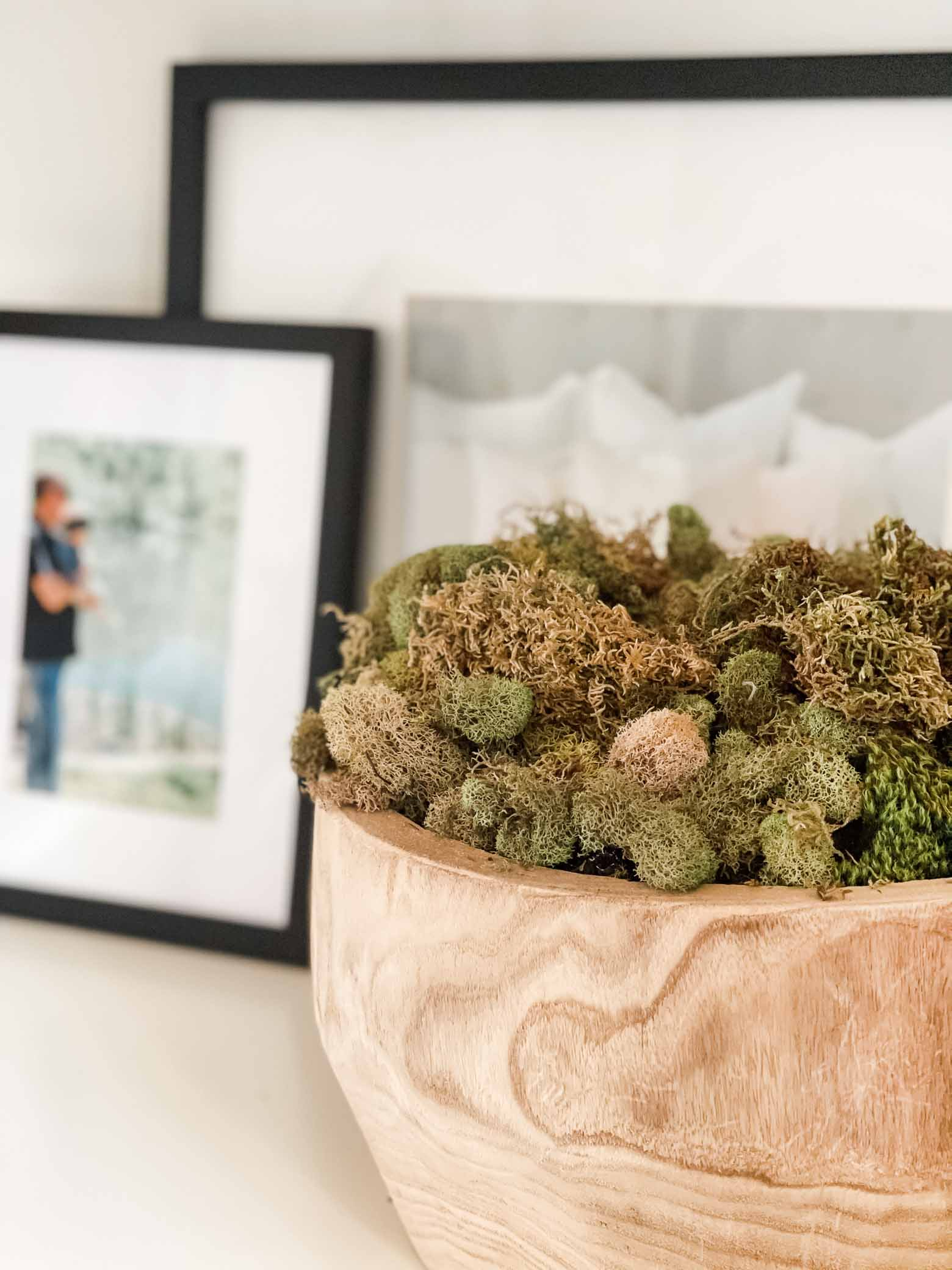 Moss Decor Accents for Summer