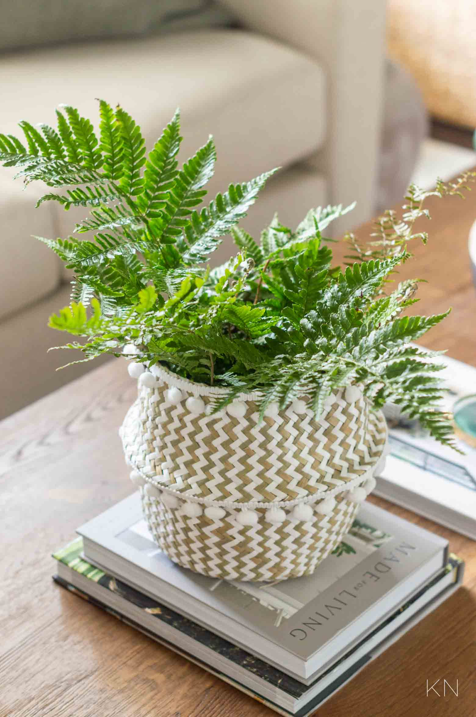 Coffee Table Plant with Inexpensive Planter Basket