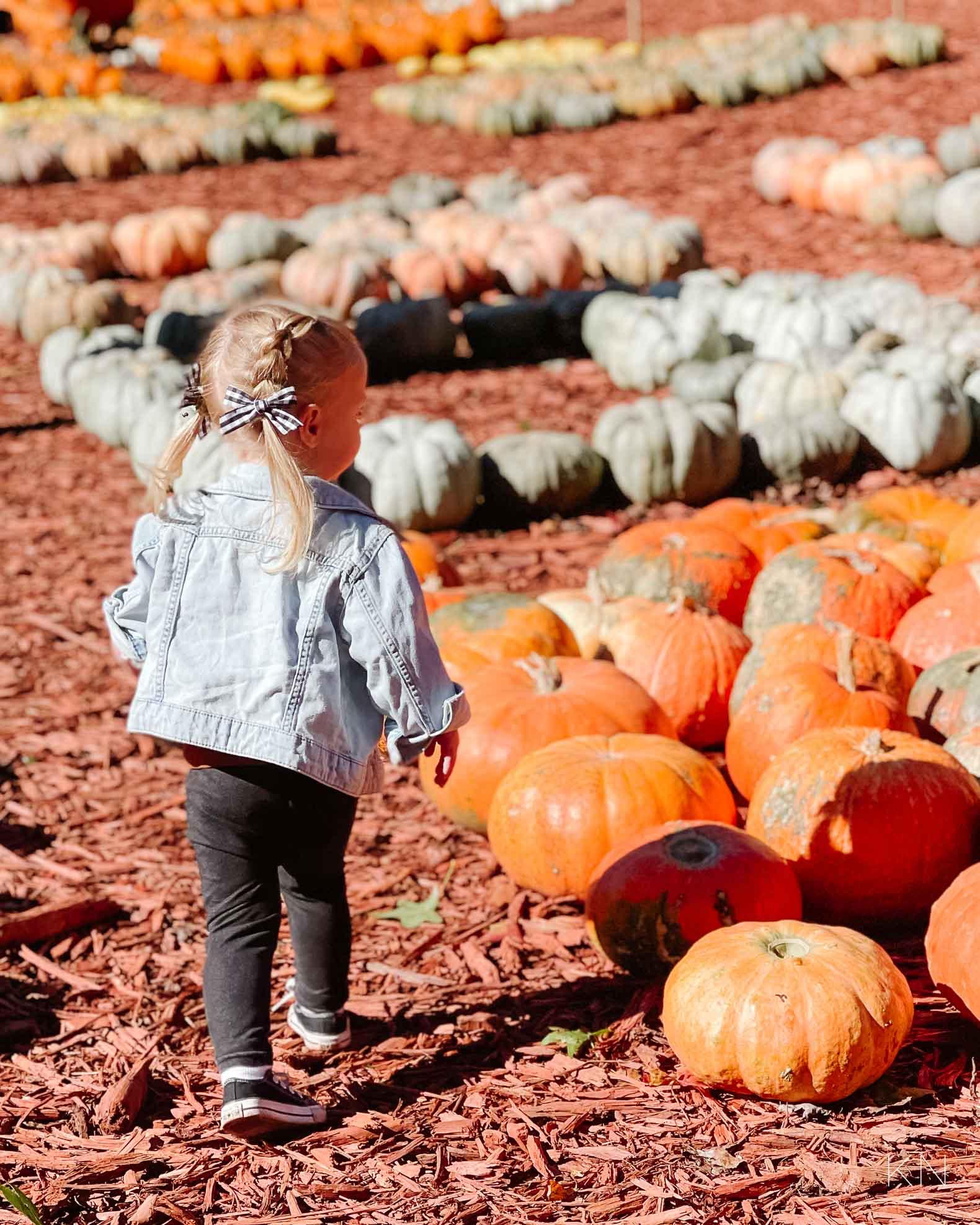 Day at Burt's Pumpkin Farm -- A Pumpkin Patch in North Georgia Mountains